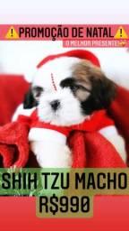 *PROMOÇÃO* Shih Tzu macho Top lindíssimos contrato garantia R$990