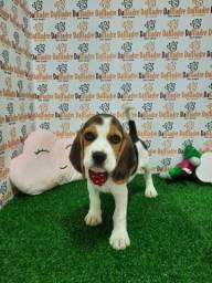Da madre vende filhotes de beagle
