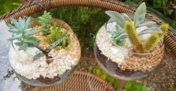 Vasos de vidro com cactos e suculentas