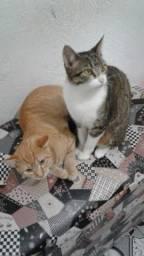Casal de gatos para adoção