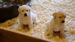 Labrador, somos a unica rede com clinicas veterinarias, chamar what's