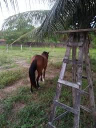 Égua boa de andar