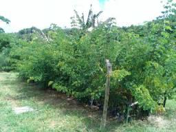 Capibaribe verde reflorestamento