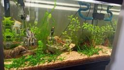 Vendo aquário Completo!!!