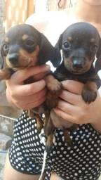 Vendo três lindos bebes