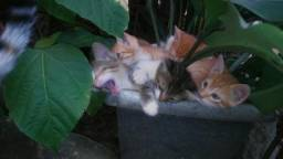 Doacao de gatos