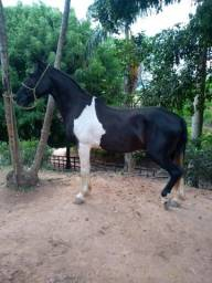 Cavalo Mangalarga marchador de charrete