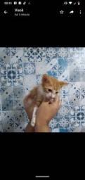 Doação consciente filhote de gato