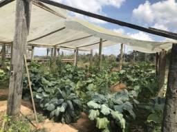 Fazenda documentada à venda, 61 hectares, Bujari/Ac