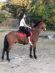 Cavalo Rosilho
