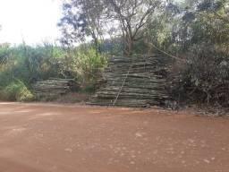 Vendo bambu para todos tipos de trabalho bambu cana de india e bambu comum