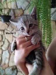 Doação de gatinhos (macho e fêmea)