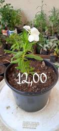Plantas para o seu jardim