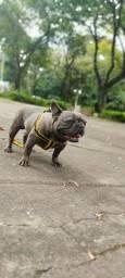 Troco Bulldog francês BLUE Blinder