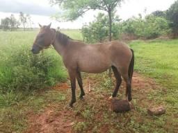 A venda egua nova, prenha , mança de buçal