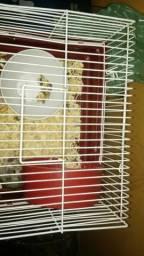 Hamster anão russo (fêmea com casinha)
