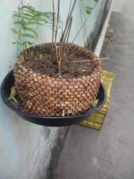 Chachi para plantas