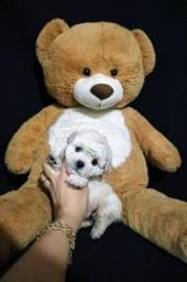 Lindas mini Poodle toy