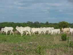Fazenda em Gaúcha do Norte MT