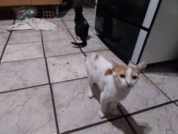 Casal de gatos com 3 meses
