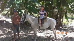 Vendo ou troco egua de corrida