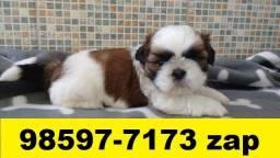 Canil em BH Filhotes Cães Shihtzu Poodle Lhasa Beagle Yorkshire Basset Maltês