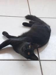 Doação deste lindo gatinho.