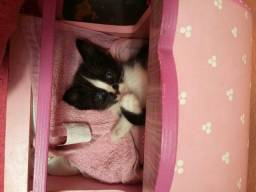 Lindas gatinhas órfãs para adoção