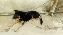 Doce essa cachorra moro em Aparecida de Goiânia