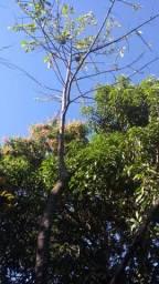 Chácara em Santo Antônio de posse