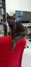 Gato Preto para adoção