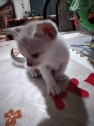 Doace gatinhos