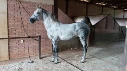 cavalo mm registrado