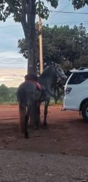 Cavalo MM Marchador