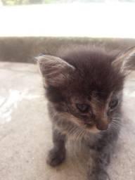 Quatro gatos novinho e bonitinhos