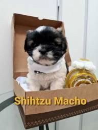 Shih tzu entregamos  no seu lar
