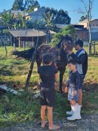 Cavalo lindo Crioulo puro!! Com documento !