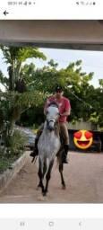 Título do anúncio: Cavalos Manga Larga