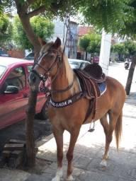 Título do anúncio: Cavalo Manga larga Machado.