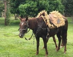 Título do anúncio: Cavalo 3/4 milha