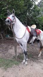 Vendo mangalarga marchador com documento provisório , cavalo enteiro, muito manso. 5 anos