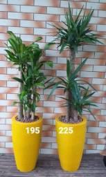 Lindas plantas ornamentais / Completos