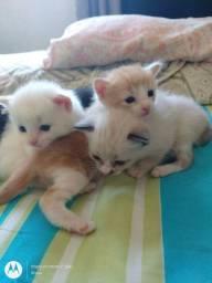 Estou doando esses gatinhos.. ?