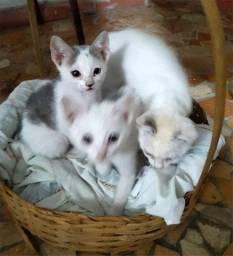 Doação de filhotes de gato / gatinhos - Região Jardim D'Abril - Osasco