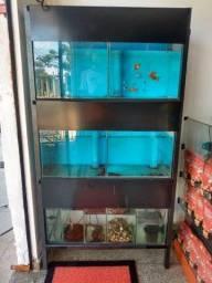 4 aquários com sistema de filtragem