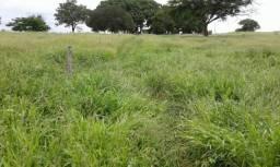 Permuta Por Imoveis Em Moc/Fazenda 407 Hectares 110 Km Da Cidade/Aceita Apto Em Bh