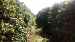 Fazenda 514 hectares em minas próximo a franca 30.000.000