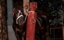 Cavalo de barbada