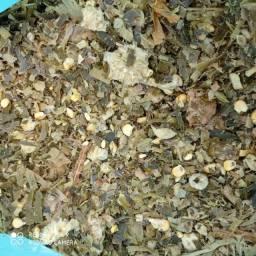 Silo ensacado com milho