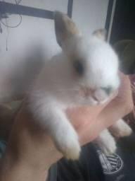 Mini fuzzy loppi